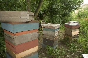 Barnaby's_Bees_006[1]