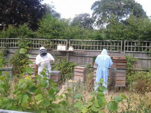 beeUrban attending hives July14