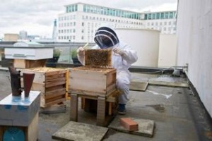 Urban-Beekeeping31-copy